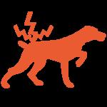 Tierarztpraxis Rosin Berlin